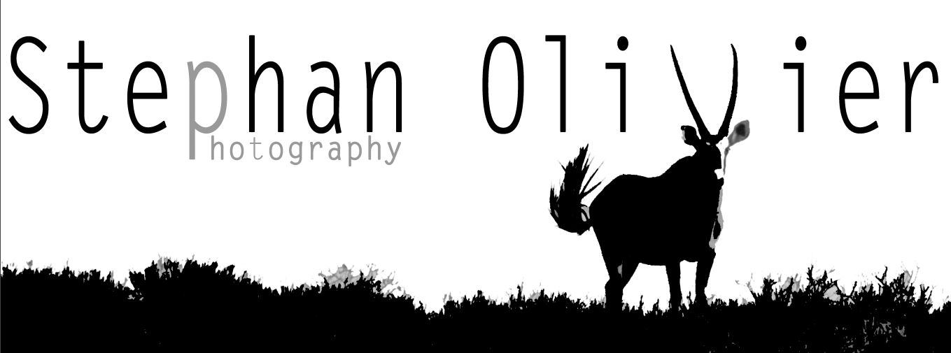 stephan olivier
